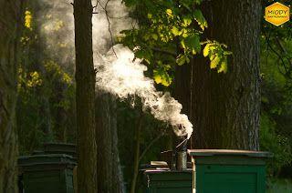 Rano w pracy. Dymiący podkurzacz. Codzienność pszczelarska w sezonie.