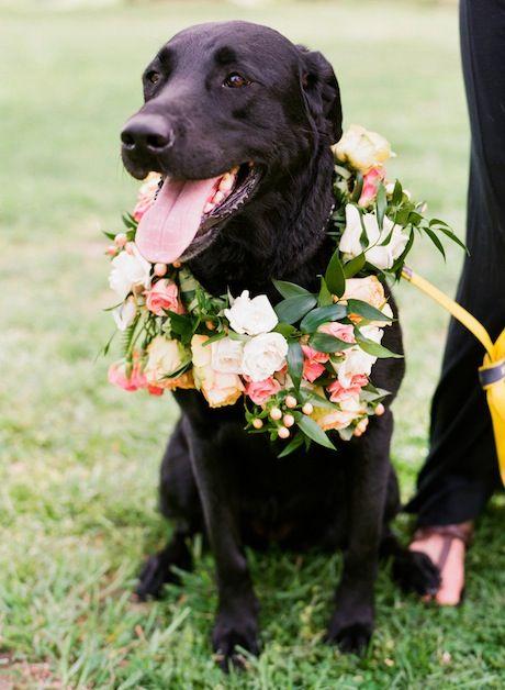 Wedding dog wearing a pretty floral wreath. #wedding #flowers #pets