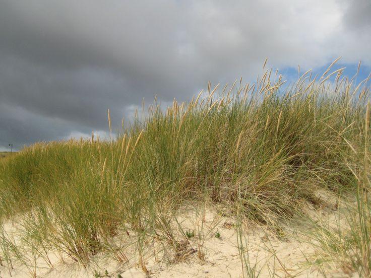 Strandhafer bei List auf Sylt  http://fc-foto.de/35248409