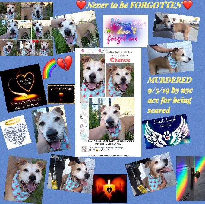 Pin By Trisha On Gone But Never Forgotten Poor Dog Your Pet