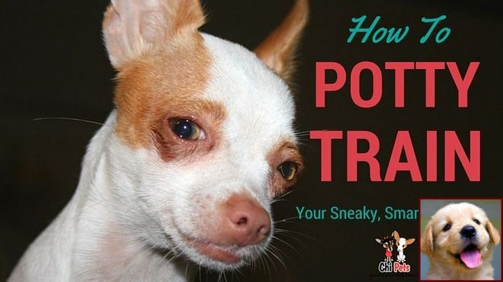 House Training Puppy Near Me And Dog Training Courses In Pune