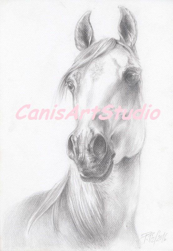BEAUTIFUL ARABIAN HORSE head Original pencil by CanisArtStudio
