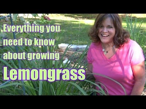 ▶ Lemongrass - Everything You Need to Know About Growing/Harvesting/Propagation - YouTube