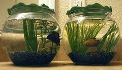 Water Plants for Fish Bowls | 20L aquarium fish Tank betta fish breeding amano shrimp