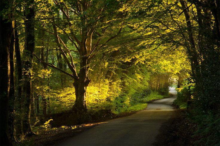 Dorset, woodland, golden, dawn, sunrise, landscape, stunning