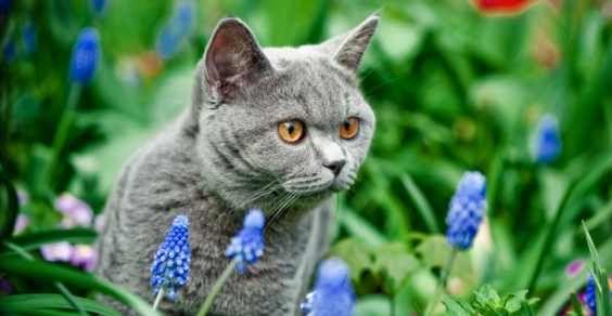 10 erbe per migliorare la salute del vostro gatto