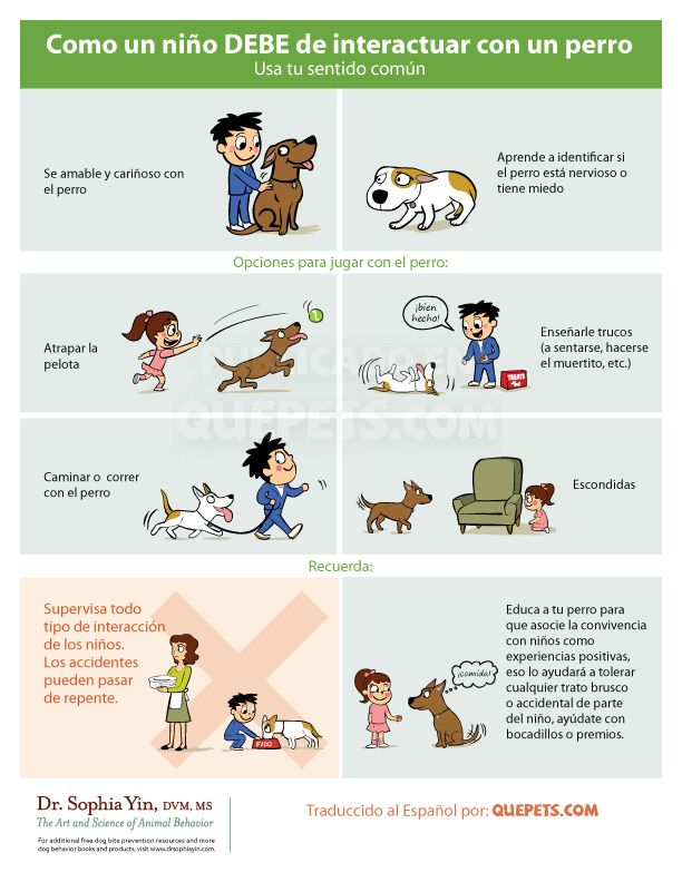 como-un-niño-debe-interactuar-con-un-perro
