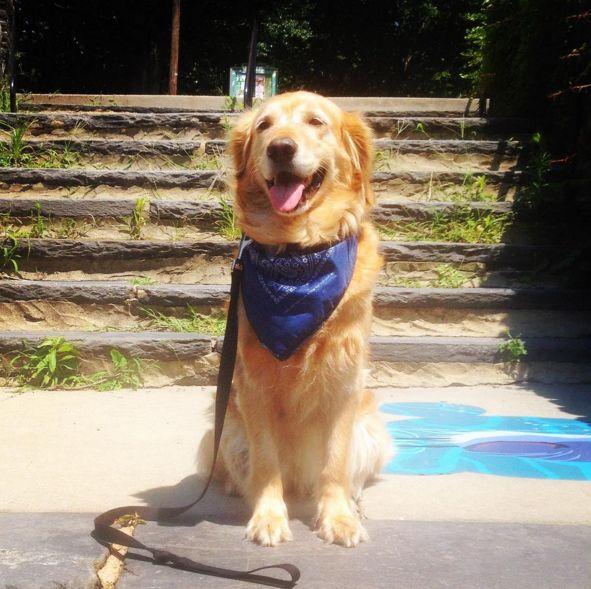 Happy to be at Manayunk Dog Park! - Pretzel Park - Philadelphia, PA - Angus Off-Leash #dogs #puppies #cutedogs #dogparks #philadelphia #pennsylvania #angusoffleash
