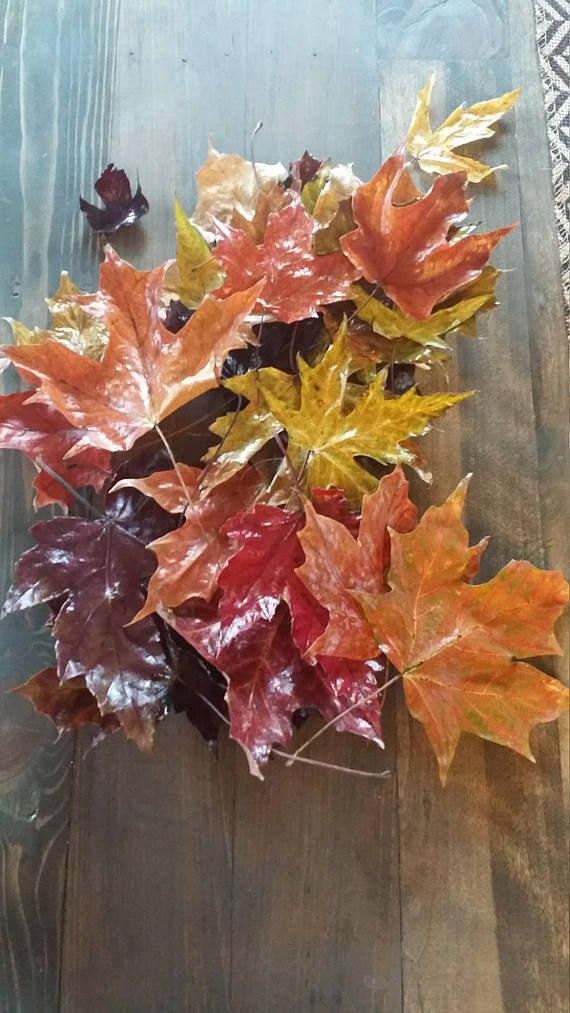 This listing is for a set of 25 beautiful Wisconsin fall leaves. This set includes a wide variety of beautiful fall colors and sizes. These were each hand picked and glazed by me. They would make a beautiful banner, fall wreath or fall wedding decoration. Please message us with any questions and ask about discount codes. Be sure to browse our shop as we have quite the variety. Thanks for looking