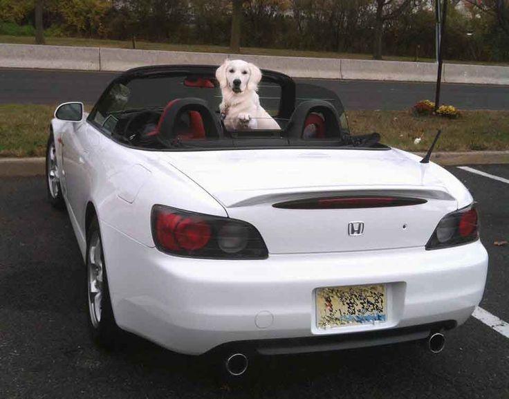 White Golden Retriever Puppies,CT,AKC Certified,Holistic,NJ,MD,MA,PA,DE,NY,CA,AZ,TX,FL,RI,OR,WA,English