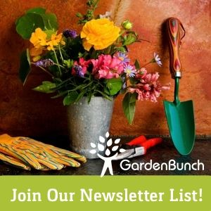 For new blog postings and SPECIAL DEALS in our Marketplace, and other gardening news, be sure and sign up for our newsletter! GardenBunch.com