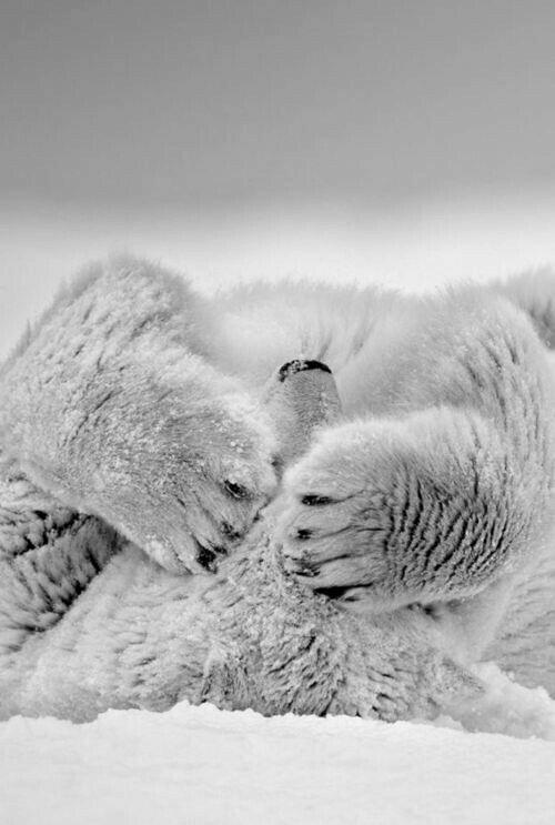 Winter...Polar bear.....