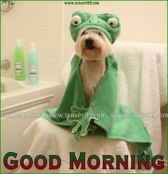 Good Morning Everyone Gee Cover : Good morning lovable dogs to care pinterest