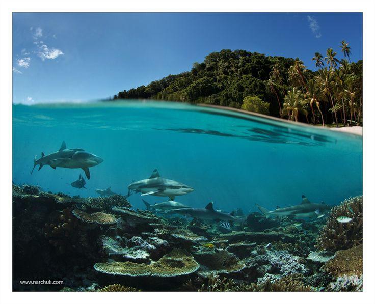 Photographer\s photo Нарчук Андрей - Райский остров? Смотрите глубже...