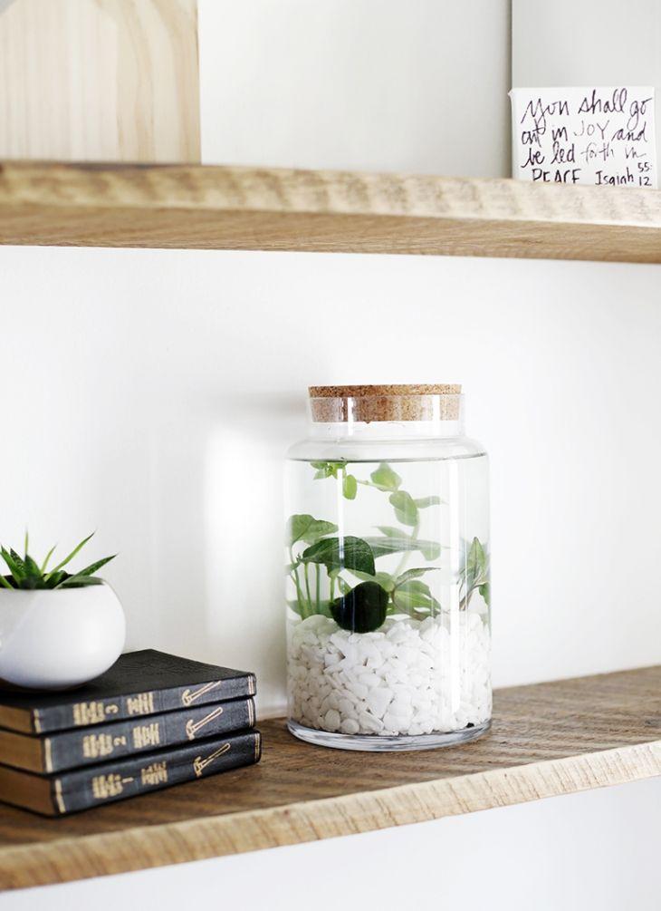 Jardins aquatiques d'intérieur simples – Sakarton