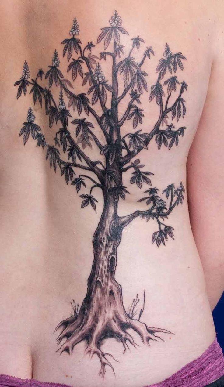Mango tree tattoo. Mango tree design intelligent person ...