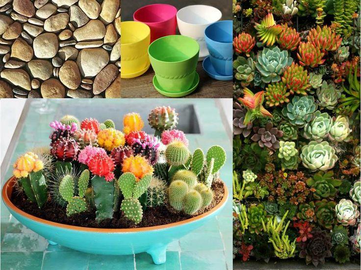1000 images about terrarios on pinterest terrarium - Plantas para terrarios ...
