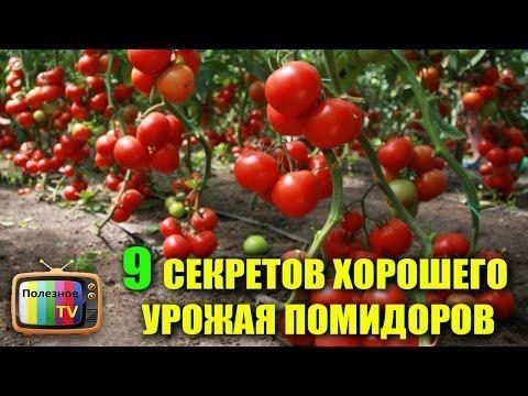 9 СЕКРЕТОВ ХОРОШЕГО УРОЖАЯ ПОМИДОРОВ УЗНАЙ ПЕРВЫМ - YouTube