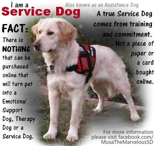 how to find a service dog