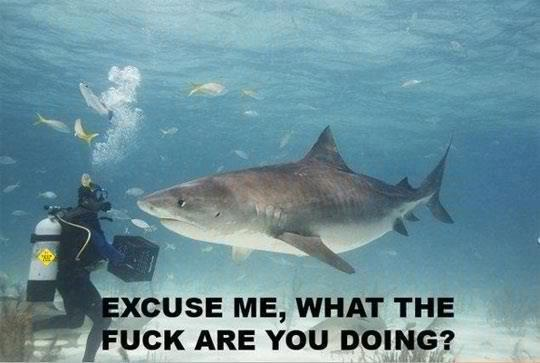 Sharks! Lovely animals...