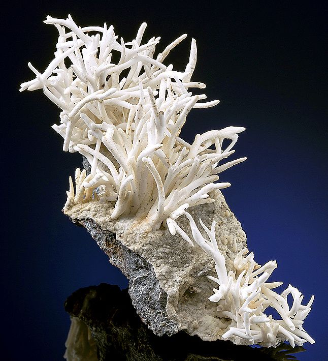 Beautiful specimen of Aragonite var. Flos Ferri on matrix! Eisenerz, Styria, Austria- / Mineral Friends <3