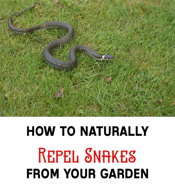 How To Get Rid Of Grass Snakes In Your House