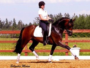 An exquisite young star! 2008 Westphalian gelding by Florenciano (Florencio). Effortless gaits with lots of airtime that are impressive! Perfect for the Young Horse classes, but an FEI horse for sure. Already shows talent for piaffe/passage. Solid 2nd, schooling 3rd! $90,000
