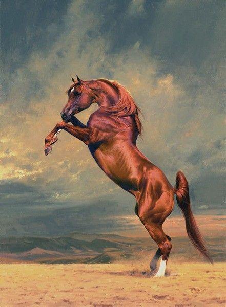 Peter Smith-Arabian horses. Talk to LiveInternet - Russian Service Online Diaries