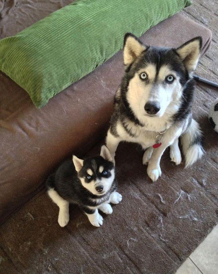 perros en familia4