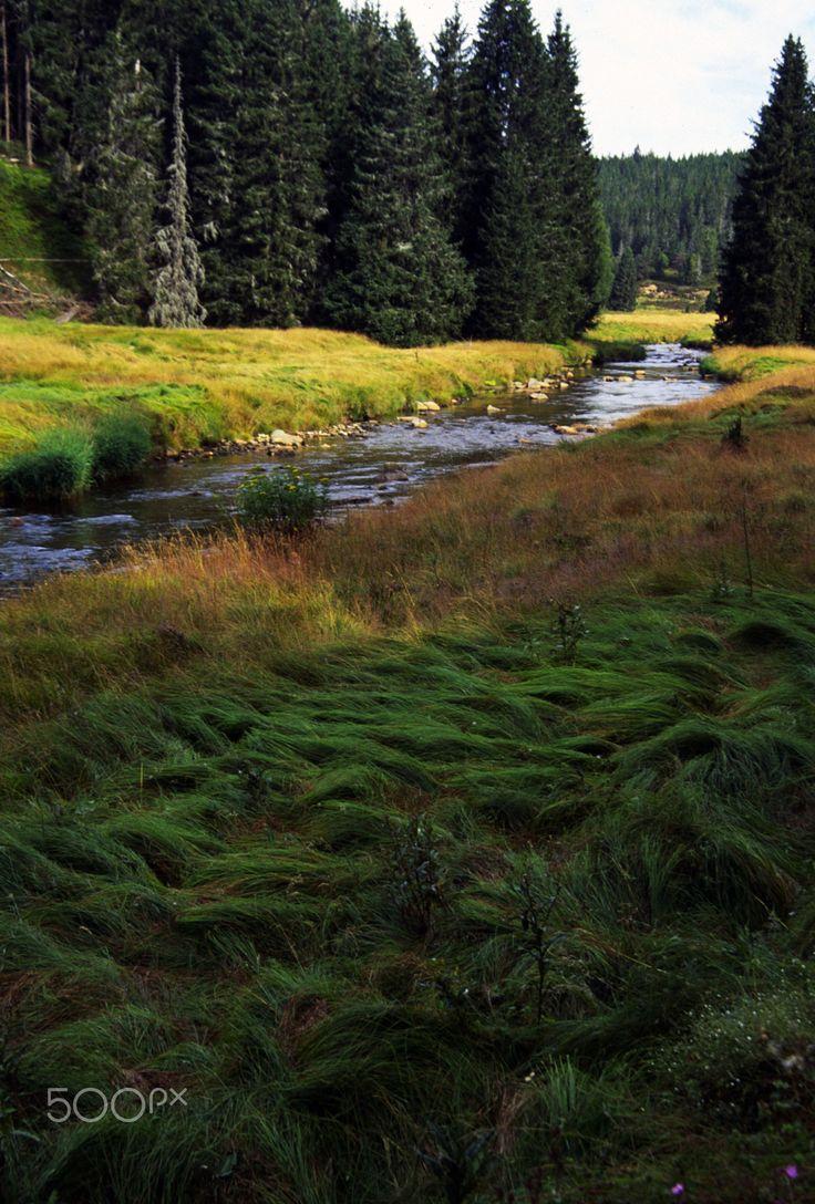 Rokytka - Modrava - Sumava II,, by Dagmar Germanicova... #river #rivulet #Šumava