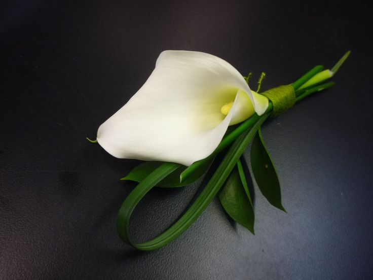 white calli lily for guys  Google Image Result for https://www.florals-by-design.com/media/catalog/product/cache/1/image/9df78eab33525d08d6e5fb8d27136e95/p/1/p1030459.jpg