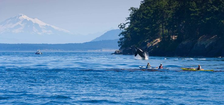 Get a great deal on round trip ferry from Seattle to Friday Harbor, San Juan whale watching and a stay in a Friday Harbor hotel of your choice.
