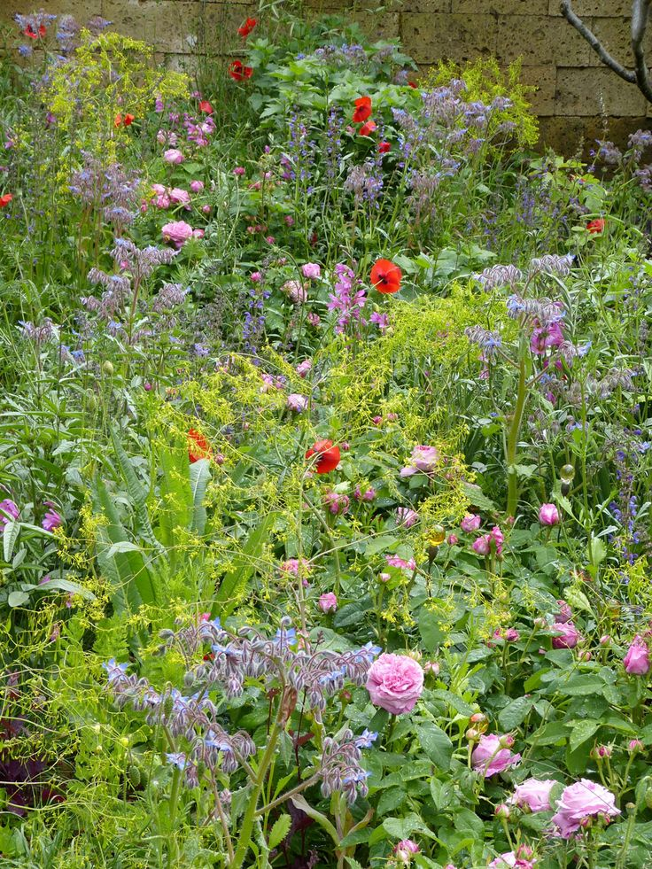 The L'Occitane Perfumer's Garden in Grasse from the Chelsea Flower Show