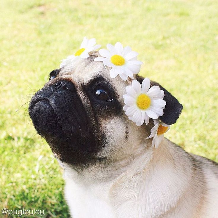 Flower Child! Love this hippie dog!