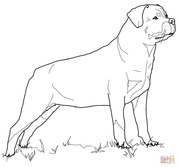 Rottweiler | Super Coloring (With images) | Dog coloring ...