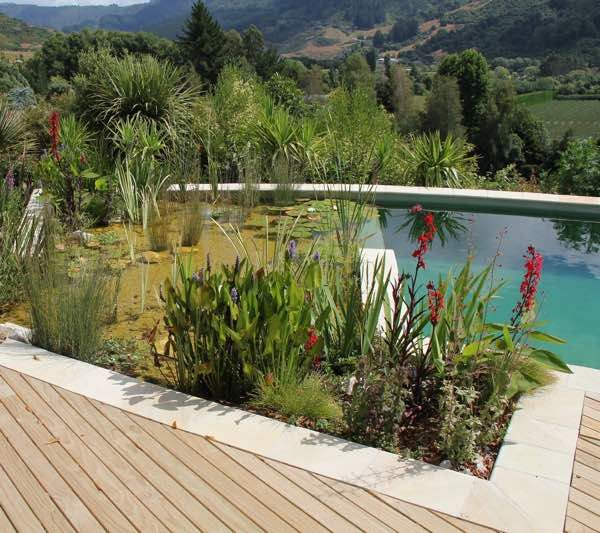 natural swimming pool - chemical free