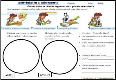 actividad-laboratorio
