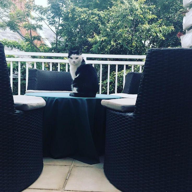 #Missy loving her domain! #CatsOfTwitter #CatsOfInstagram