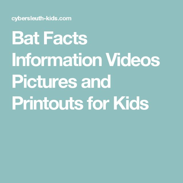 Bat Facts Information Videos Pictures and Printouts for Kids