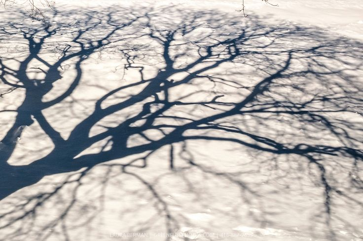 Maple Tree Shadow Shadows On The Snow Of A Deciduous