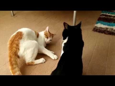 Funny Cats Compilation Video - 面白い猫のビデオ - 4K Ultra HD 2160p -  #animals #animal #pet #cat #cats #cute #pets #animales #tagsforlikes #catlover #funnycats  Learn how to speak cat! Click HERE for the cat bible! Subscribe To Stay Updated With My Latest Videos Ultra High Definition Footage  Tags : Funny Cat Kitten Comedy Laugh Lol Cute Small Amazing Beautiful... - #Cats