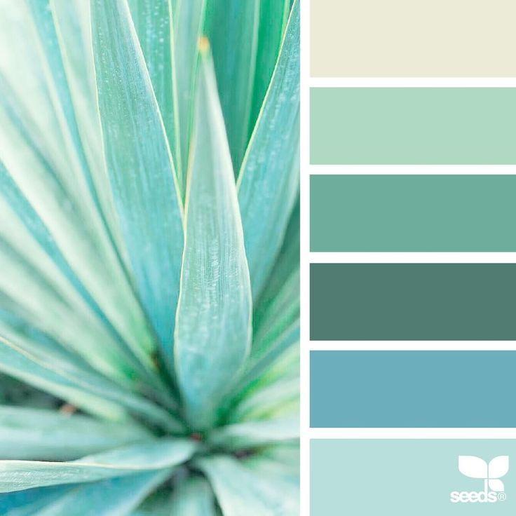 Succulent Color Palette Aloe Vera Leaf Teal Blue Green