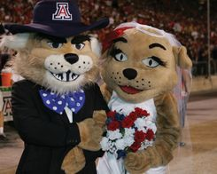 You Know You Go To The University of Arizona When... - The Odyssey Online