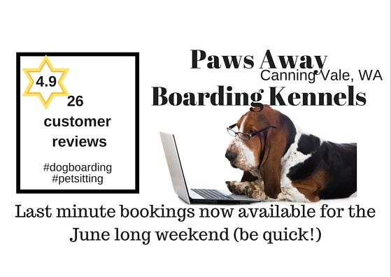 #PawsAway #CanningVale #WA - Last minute bookings available June long weekend #dogboarding http://petstayadvisor.com.au/business/paws-away-boarding-kennels