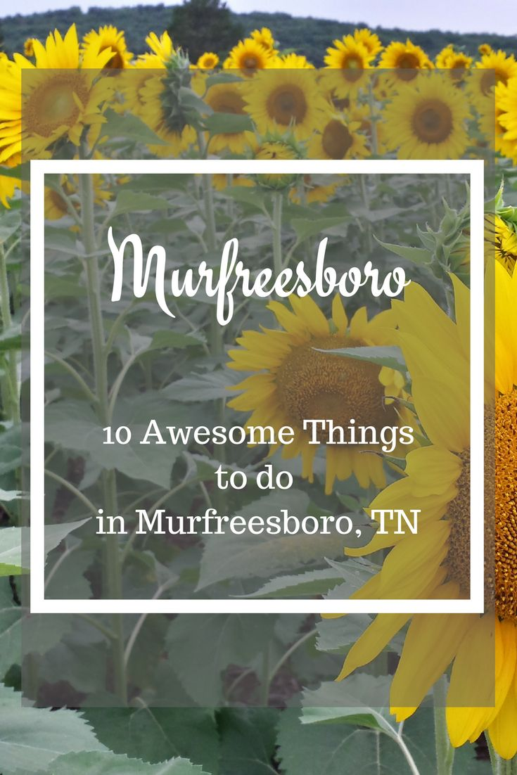 Great Things to do in Murfreesboro Tennessee including Stones River National Battlefield, Great Restaurants, and an amazing family farm!