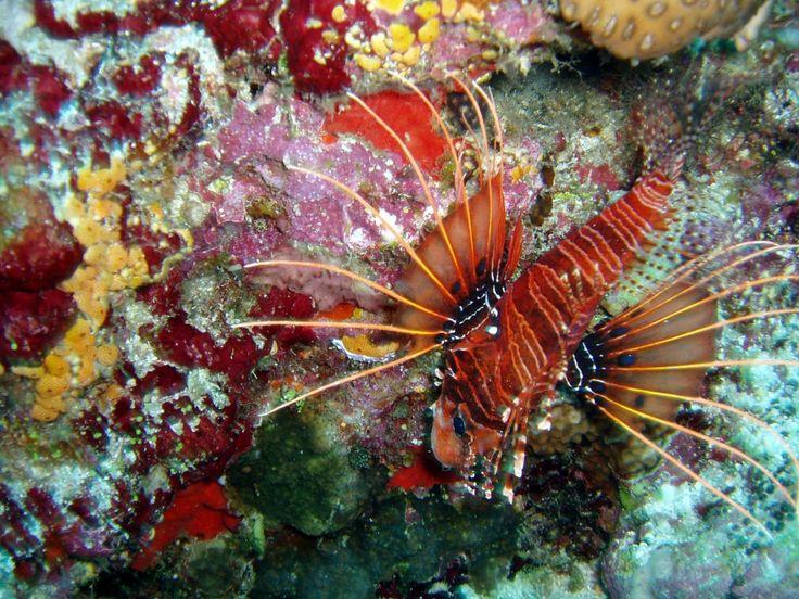 Lumea subacvatică din Oceanul Indian.