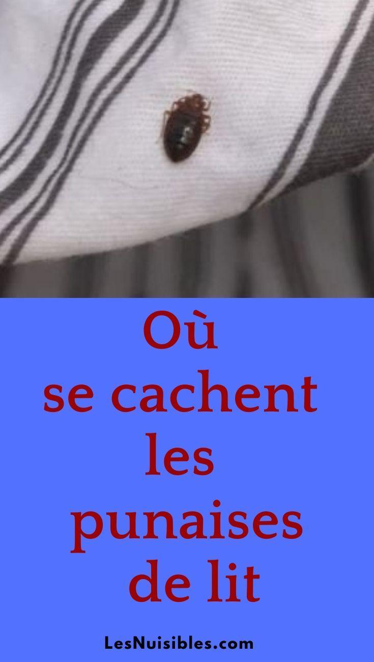 Trouver La Cachette Des Punaises De Lit Pour Un Traitement Efficace Punaises De Lit Puce De Lit Traitement Puce De Lit