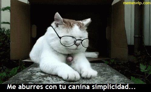 Meme compleja simplicidad #chistes #meme #memes #momos #español #memesenespañol #memesvip #memesvipcom #chistecorto #humor #2017trends #2017 #madrid #barcelona #california #losangeles #mexico #argentina #chicago #sevilla #valencia #newyork #venezuela #colombia  #trending #usa #cat #gato #animals #dog