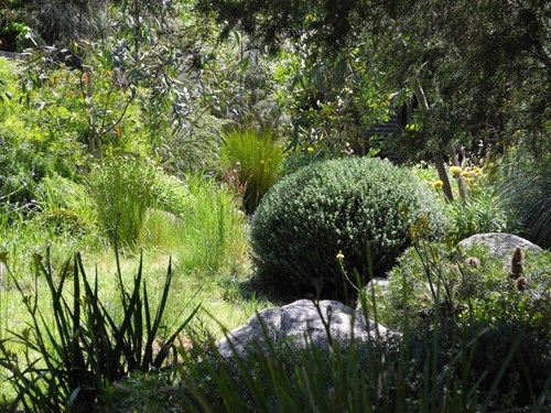 Landscape Design Melbourne | Sandra McMahon Gardenscape design: native plants respond as well as Box to clipping and shaping!