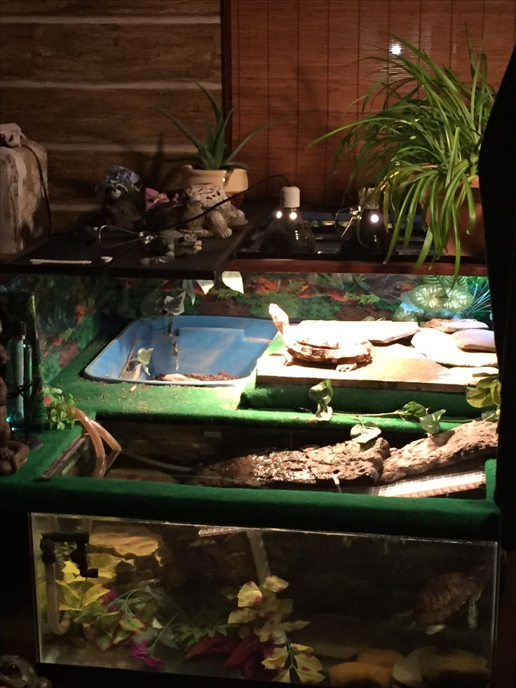 This is my turtle habitat that I made for my 2red eared